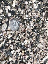 Real Ocean Sea Shells And Beach Stones 5lbs