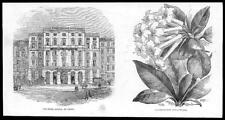 1855 Antique Print - AUSTRIA Vienna Hotel Munsch Jasmine Rhododendron   (204)
