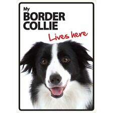 Border Collie Lives Here A5 Plastic Sign