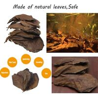 Terminalia Leaf Aquarium Clean Tool Almond Tree Natural Catappa Leaves
