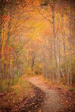 Michael Hudson Winding Path Photograph Nature Tree Path Print Poster 13x19