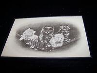 Rare Vintage Antique Animal Postcard Cats Kittens Feline Kitties in Hammock Cute