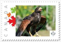 EAGLE, predator, Custom/Personalized Postage stamp MNH Canada 2018 [p18-05sn5]