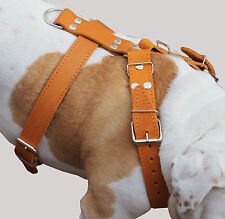 "High Quality Leather Walking Dog Harness 30-35"" chest, wide 1.5"" Bulldog"