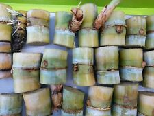 100 sticks Sugar Cane Green Juicing Chewing Organic Plant