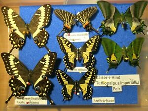 StoreBox 4 (7) Tropical Butterfly Moths Insect Lepidoptera Taxidermy Entomology
