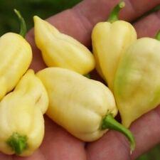 100 Seeds Bhut Jolokia White Long Pepper Super Hot Organic Vegetables Gardening