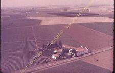 Original Ekta Diapositive transparancy Algérie Vignoble dans plaine la Mitidja