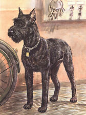 GIANT SCHNAUZER LOVELY DOG GREETINGS NOTE CARD