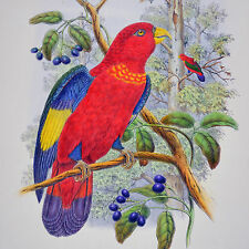 GOULD / HART - BIRDS OF NEW GUINEA – BLUE-THIGHED LORY