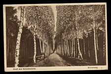 Very old German Postcard - Birch Alley - Printed in Berlin 1930