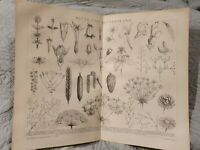 Flowers and Flower Anatomy - Antique Book Page - c.1885 - German Text