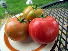 Dragon's Eye - one of the most handsome tomatoes you can grow