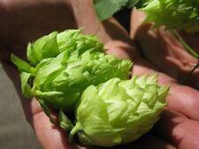 25 German Magnum Hops Seeds Cash Crop Home Beer Brewing Non GMO Organic