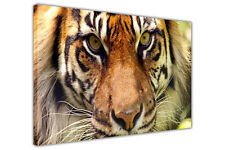Wild Bengal Tiger on Framed Canvas Wall Art Pictures Animal Prints Wildlife