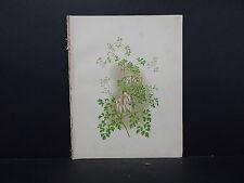 Botanical, WildFlowers, Issac Sprague C. 1883 #12 Mountain Fringe