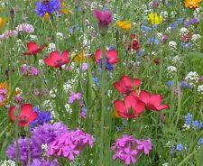 5 gr. Samen (> 2000) für ca. 5 m² Blumenwiese, Blütenteppich, Blumensamen, Mix