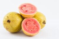 Apfel-Guave Obst Samen exotische Früchte Obstbaum Saatgut Exot