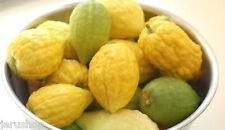 20 Mixed Etrog seeds Citron Israeli Fresh  Citrus Medica  Kosher Sukkot אתרוג