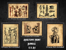 More details for human anatomy medical dark bundle x 5 gallery wall art a4 antique effect skull
