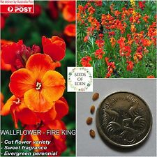 25 WALLFLOWER - FIRE KING SEEDS(Cheiranthis cheiri); Fragrant ornamental plant