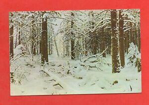 Foresta IN Inverno (K3248)