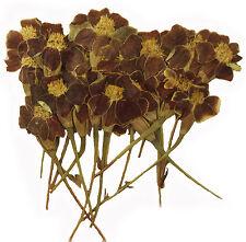 pressed flowers marigold 20pcs calendula for art craft card making