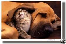 Kitten & Hound - Pals Cat Dog Animals Print  NEW POSTER