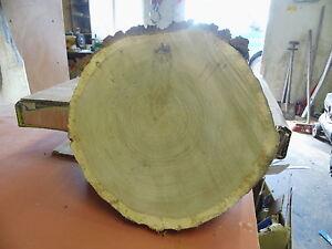 Baumscheibe, Holzscheibe, 45 x 10 cm, Eiche