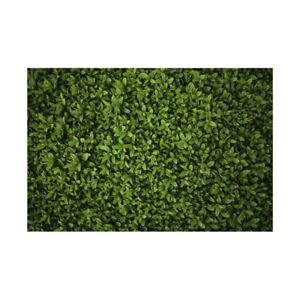 Green Grass Lawn Backdrop Decor Photographic Background 7x5ft