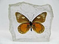 Ein echter Schmetterling in Kunstharz gegossen   Geschenkidee Briefbeschwerer