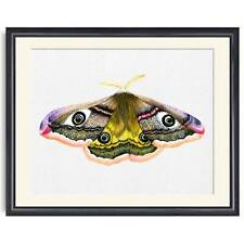 A4 Emperor Hawk Moth Watercolour Signed Limited Edition Print Unique Gift