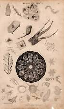 Microscopic Objects: Antique Print Engraving 1859 Oliver Goldsmith