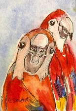 ACEO Two Parrots Red Macaws Bird Painting Watercolor Illustration Penny StewArt