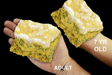 "Seafoam Jasper 4"" 14-19 Oz Rocks and Minerals Specimen Healing Crystals Stones"