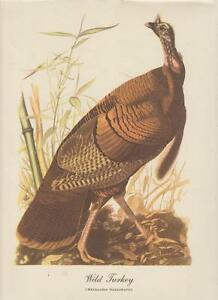 "Audubon Wild Turkey Art Print Best Loved 9"" x 12"" Vintage 1970"