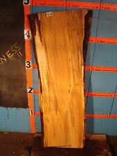 """#9276   1 11/16"""" THICK  black line spalted maple live edge slab"""