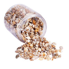 Boxed Lots Natural Beach Shells - Home Decor Seashells Wedding Display Craft
