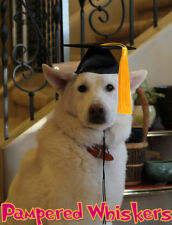 "Dog Graduation cap/hat for large sized dogs with 16-26"" collar size"