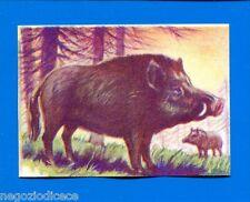 ANIMALI - Lampo 1964 - Figurina-Sticker n. 130 - CINGHIALE -New