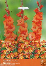 16 ORANGE PASSION MIX BULBS GLADIOLI FREESIA garden spring flowers PLANT SUMMER