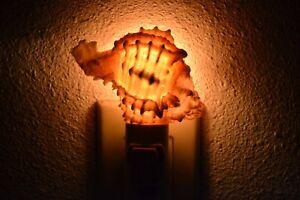 PINK MUREX SEA SHELL NIGHT LIGHT KITCHEN BATHROOM #T-2803