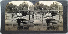 Keystone Stereoview Hatching Ostriches in Pasadena, CA from the 1920's 400 Set