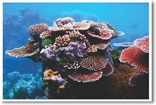 Coral on Great Barrier Reef- NEW Animal Wildlife POSTER