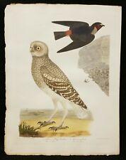 Original American Ornithology Titian Peale Burrowing Owl & Swallow Philadelphia