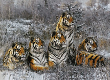 TIGER GROUP - 3D MOVING PICTURE 400mm X 300mm (NEW)