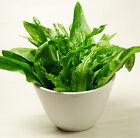 50 Garden Lettuce Seeds Lactuca Sativa Leaf Lettuce Organic Vegetables