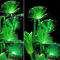 Night Light Charm Rare Emerald Fluorescent Flower Seeds Emitting Plant 100Pcs H