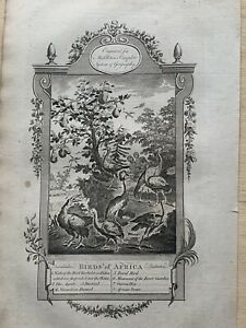 1779 Birds of Africa Original Antique Copperplate Engraving 241 Years Old