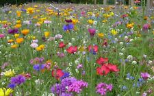 Serendipity's Heirloom Flower Garden Mix -Color! 250 Seeds Starter Pack
